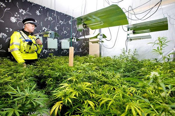 cannabis-farm-source-west-midlands-police-400px