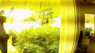 Cannabis Farms UK