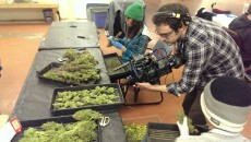 (Dale filming in the trim room at River Rock Wellness, Denver)