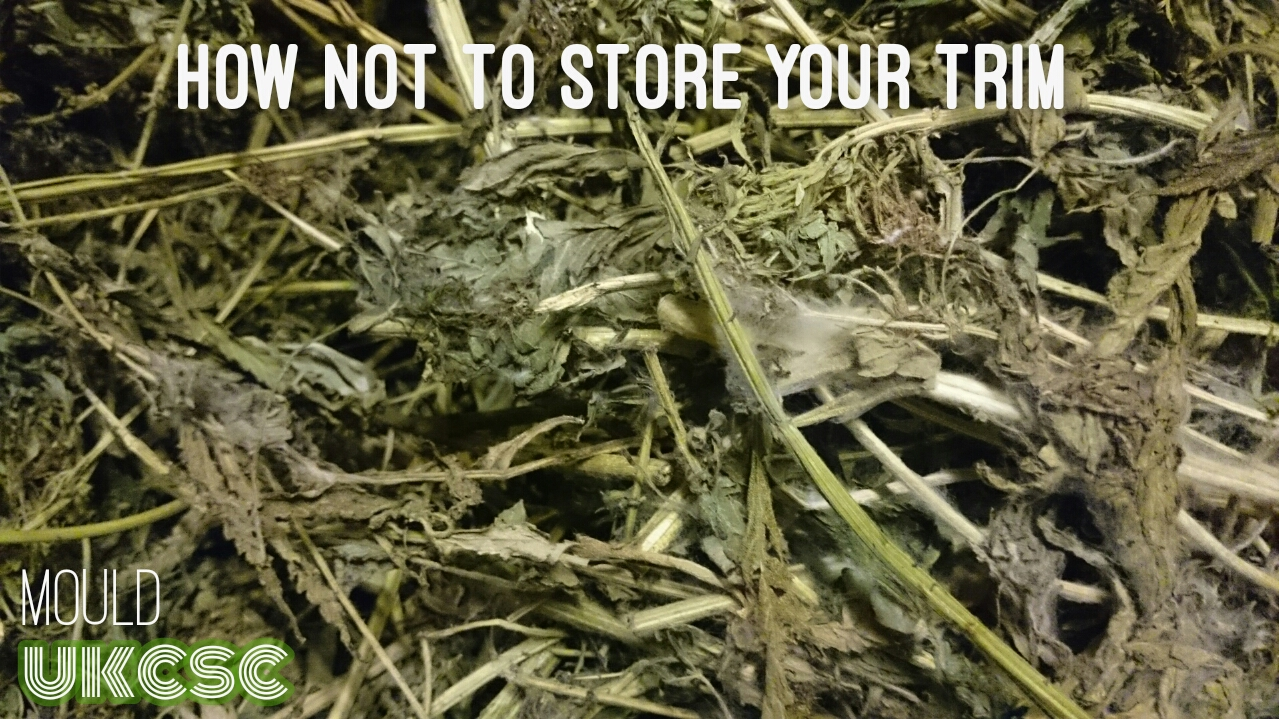 How Not To Store Your Weed