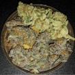 High Grade Cannabis UK