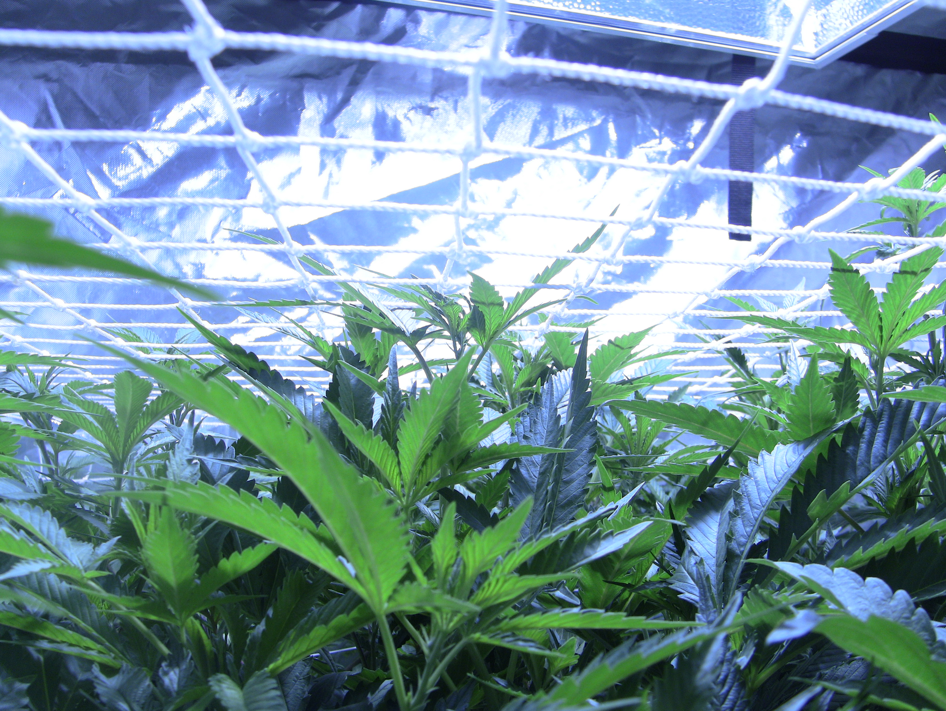 one light grow tagged plant collective