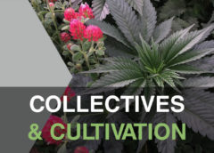 Collectives & Cultivation