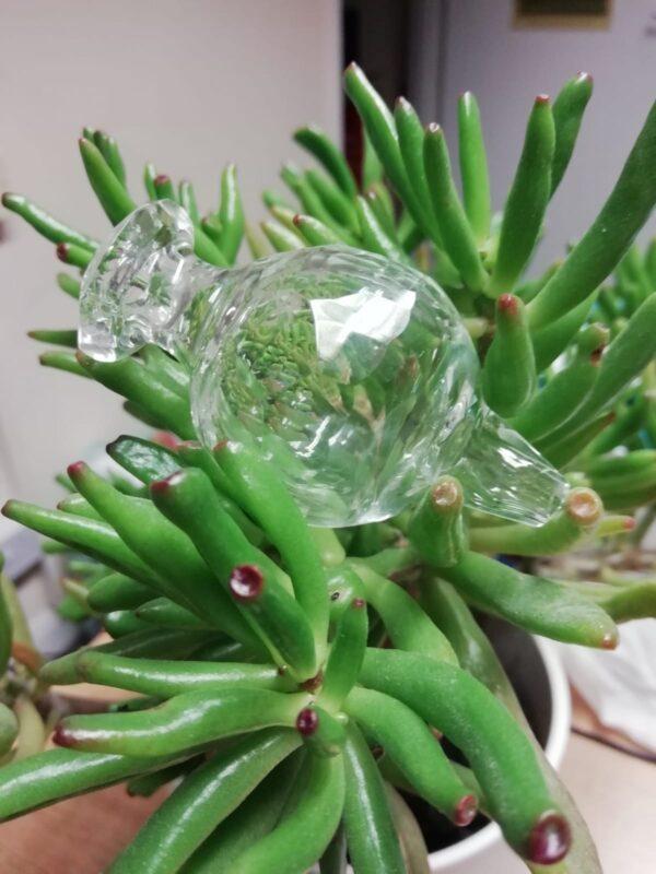 Mellow Glass Bubble Cap2